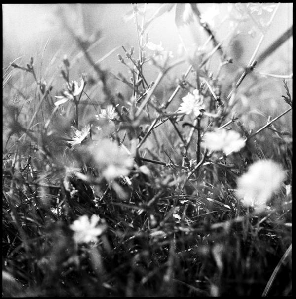 lindavandenberg-vruchtbaregrond2