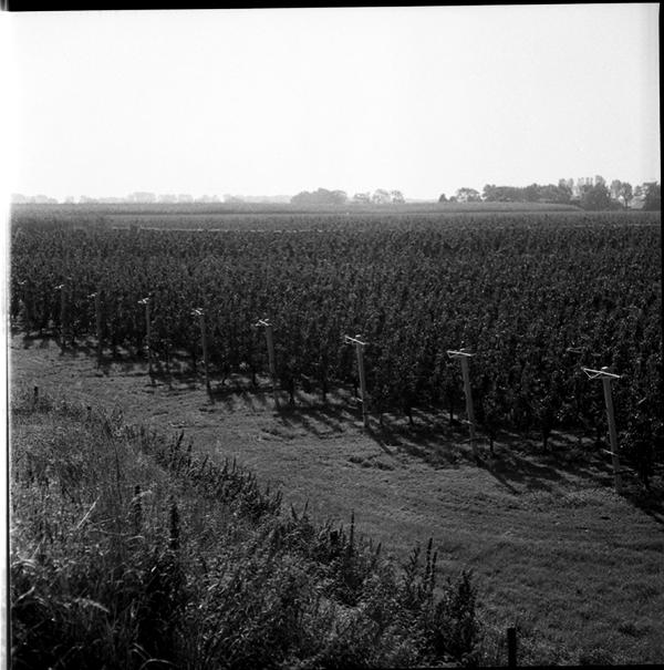 lindavandenberg-vruchtbaregrond8