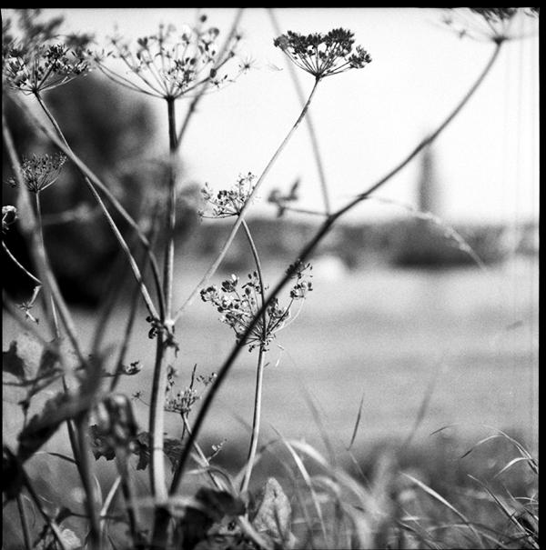 lindavandenberg-vruchtbaregrond3