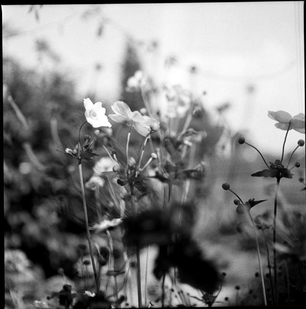 lindavandenberg-vruchtbaregrond12