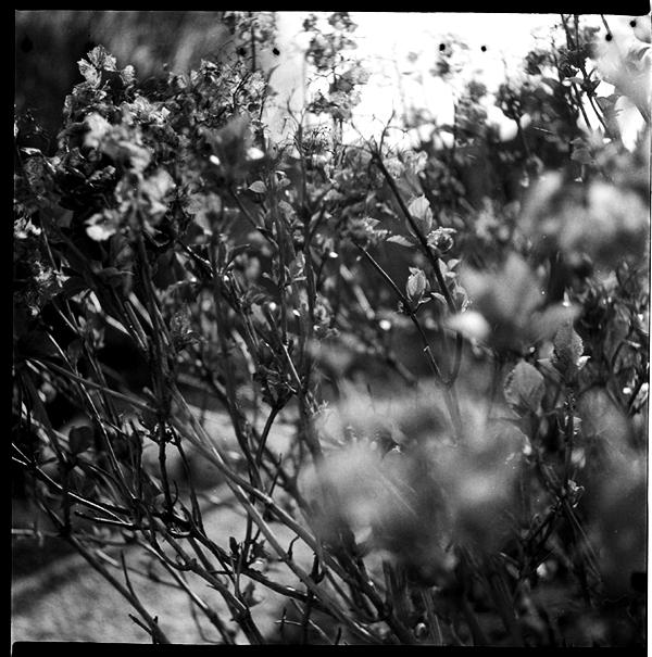 lindavandenberg-vruchtbaregrond4