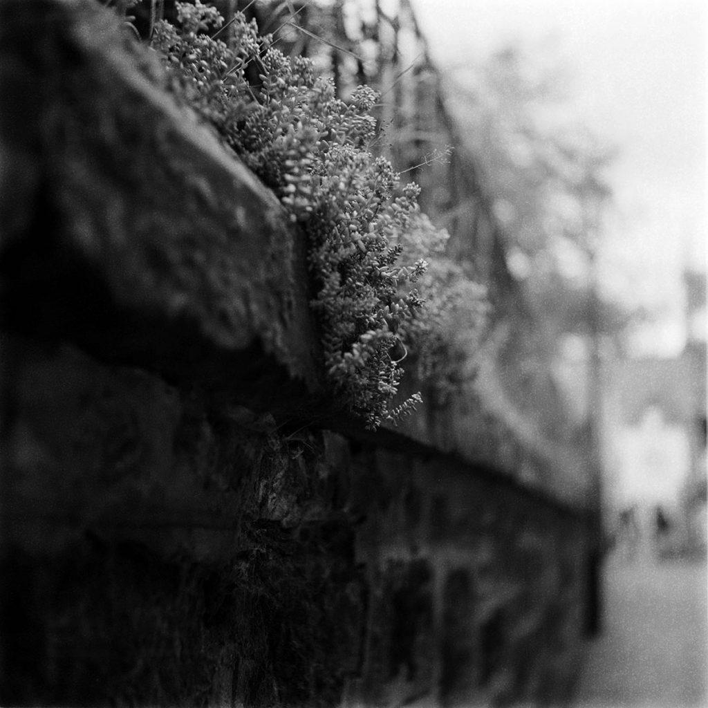 lindavandenberg-ongerept12