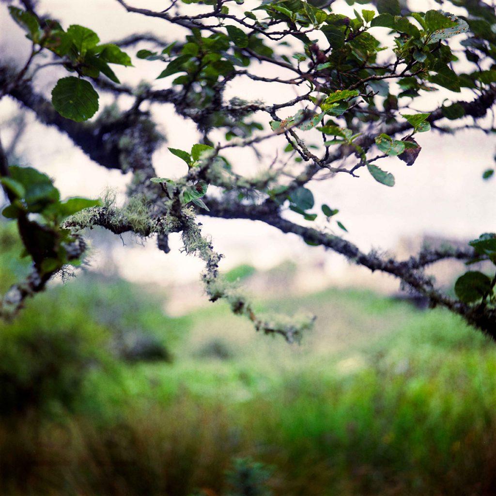 lindavandenberg-ongerept3