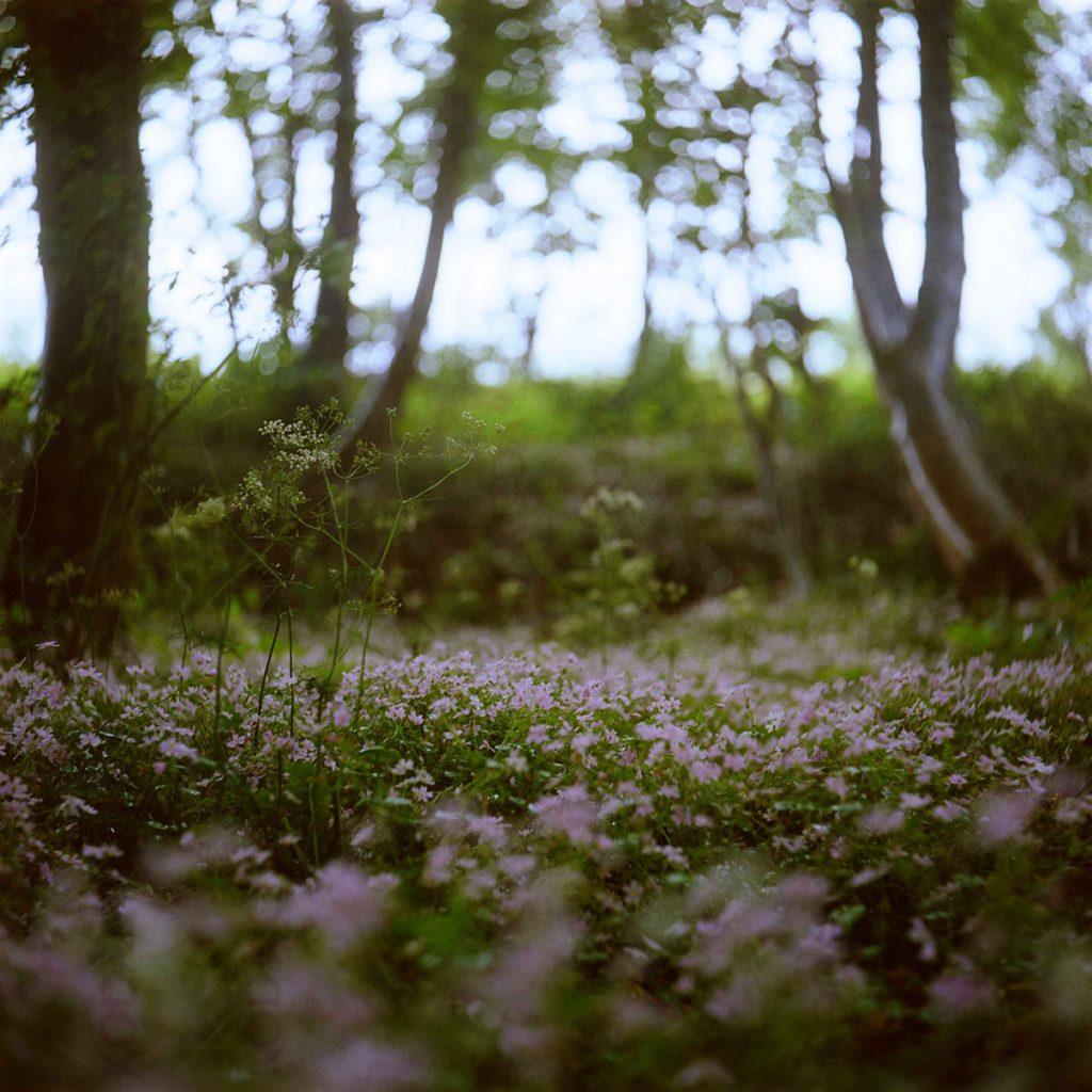 lindavandenberg-ongerept7